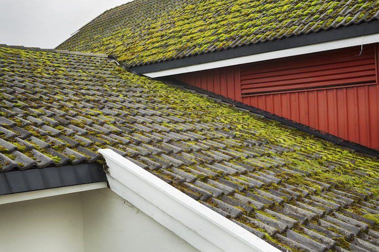 Is Moss Bad for Your Roof?